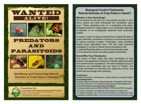 Flies In Backyard University Of Hawaii Master Gardener Program