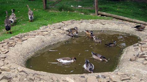 Enten Im Garten 4940 enten im garten enten im garten ducks in the garden