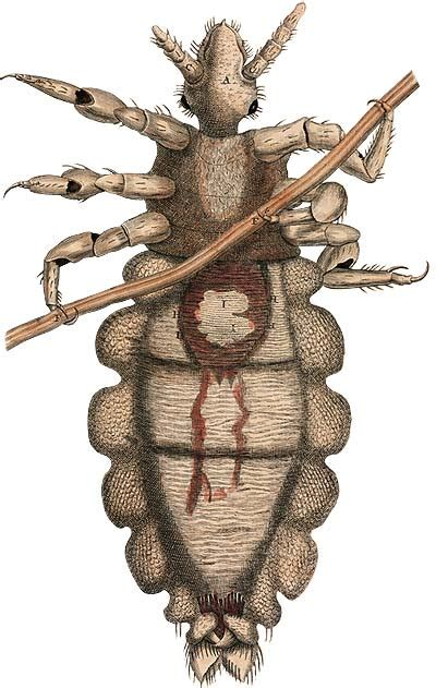 Types Of Bugs Found In Hair by The Bugs That Bugged The Colonists The Colonial
