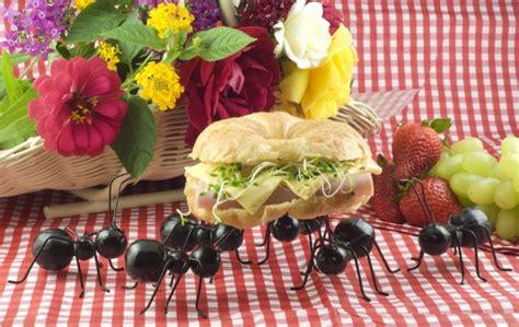 come combattere le formiche in cucina come tenere lontano le formiche dalla cucina