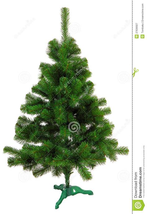 evergreen christmas tree undecorated royalty free stock