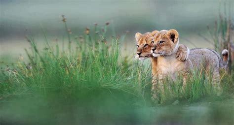 lessons   animal kingdom wake  world