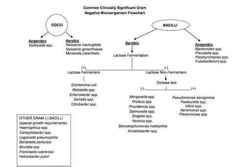 gram negative identification flowchart gram negative identification flow chart positive bacteria