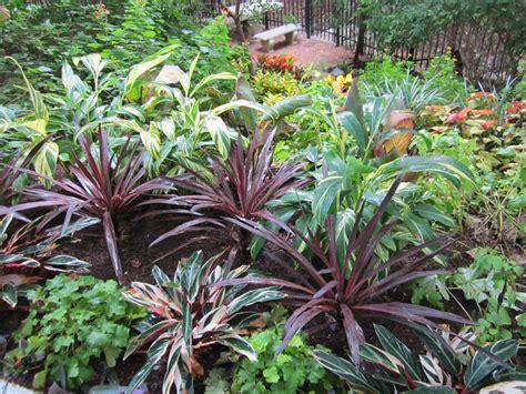 shade plants for central s landscape design