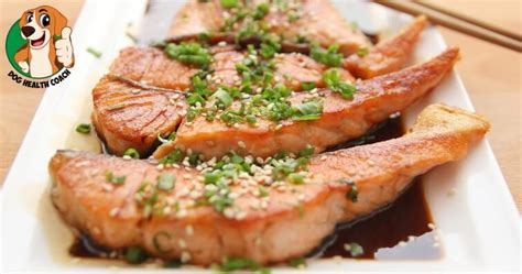 can dogs salmon can dogs eat salmon health coach