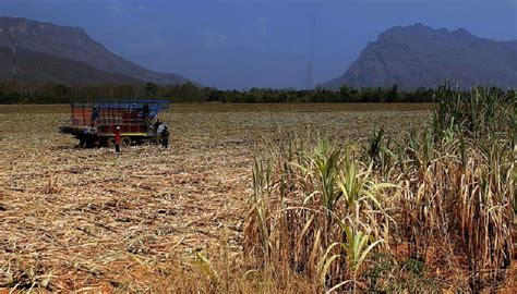 Agricultural Finance From Crops To Land Water And Ebook E Book agriculture minister warns farmers of insufficient water for crops in 2015 thailand news
