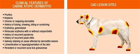 hotspots dogs our website provides detailed information about spots on dogs and also
