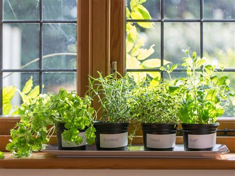 Indoor Windowsill Herb Garden by How To Plant A Windowsill Herb Garden How Tos Diy