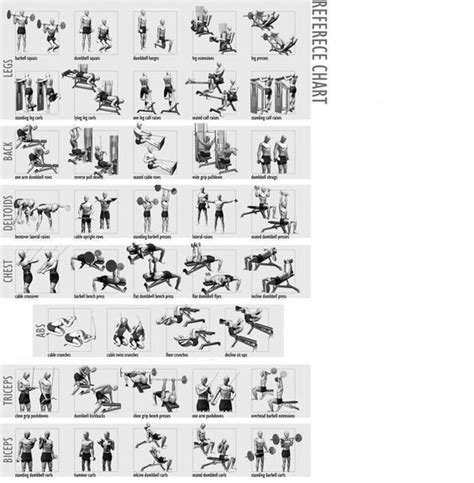 weight lifting chart for beginners workout chart home