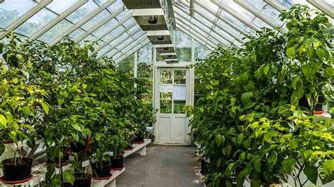 serra da giardino serra da giardino per proteggere fiori e orto dal freddo