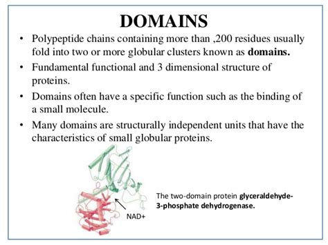 protein domain protein structure details