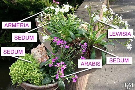 fiori invernali da vaso esterni piante per balcone piante invernali e da fiore tutte le
