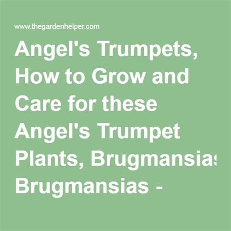tips to grow hard to propagate plants angel s trumpets how to grow and care for these angel s