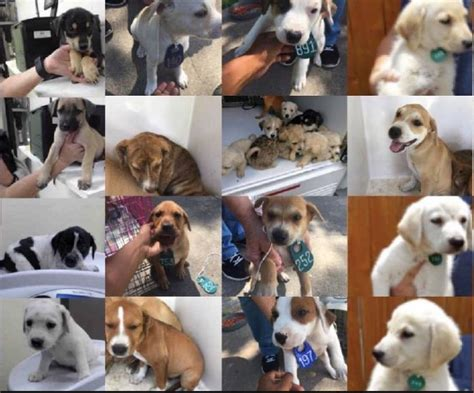 houston pound houston shelter takes in 59 puppies in just one hour kare11