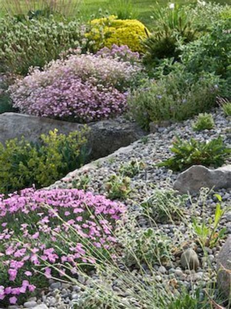 Alpines For Beginners Easy Flower Gardening For Beginners