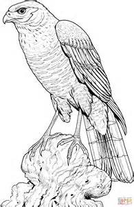 hawk coloring pages perched hawk coloring page free printable coloring pages