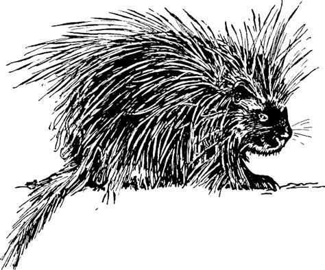 porcupine diagram free vector graphic hedgehog porcupine animal free