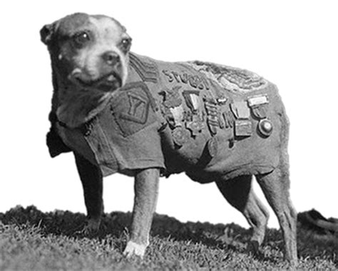 Sgt Stubby Saluting The Dogs Of War And Other Battlefield Animals Historywithatwist