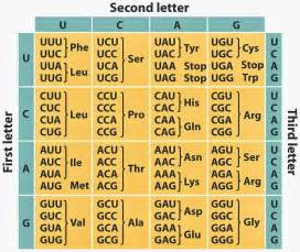 biology pictures table of genetic code