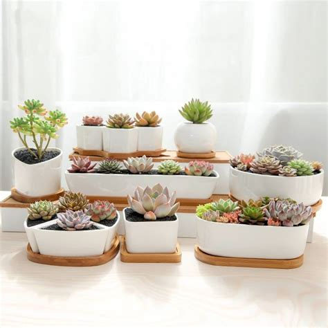succulents pots for sale succulent containers for sale 28 images 28 best images