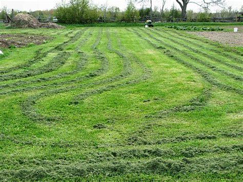 Gras Mulchen by Harvesting Carrots Mulching Garlic