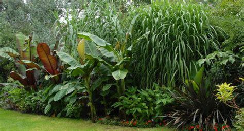 Show Plants For Garden Cool Tropical Plants