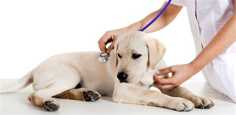 Free Home Animal Hospital by Vet Clinics Ossining Vets Yorktown Heights Croton Animal