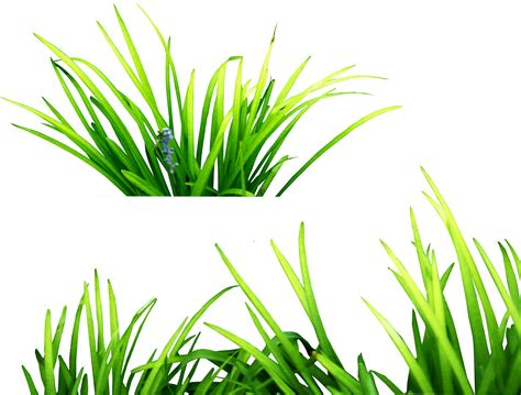 grass clipart photoshop clipart grass pencil and in color photoshop