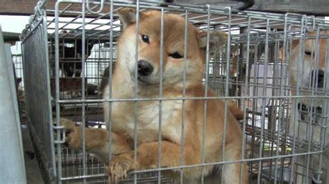 puppy pet shop japanese pet shop puppy mill
