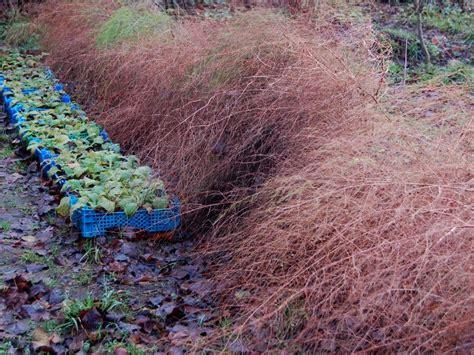 Pilze Im Garten Schlimm by Spargelkraut Schneiden 171 Wir Sind Im Garten
