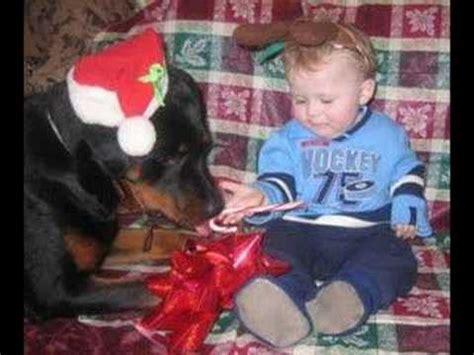rottweilers and children rottweiler ve 199 ocuk rottweiler and