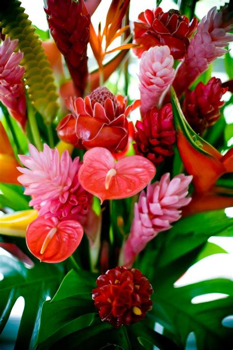 25 best ideas about tropical flowers on pinterest