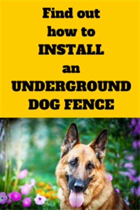 how to your with underground fence how to install an underground fence photo breeds picture
