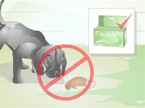 how to treat tapeworms in dogs how to treat tapeworm in dogs 9 steps with pictures wikihow