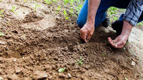 lade per coltivare che lade usare per coltivare semina e trapianto tutto