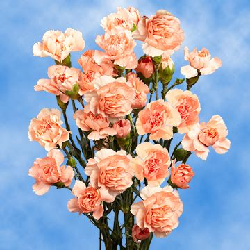Cheap Flowers by Bright Orange Spray Carnation Cheap Flowers