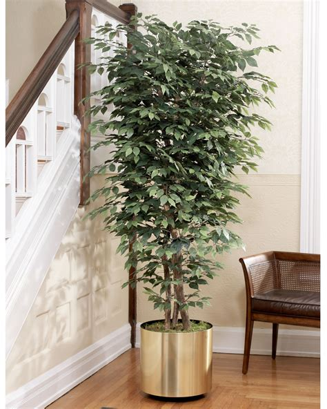 decorative trees for the home realistic 6 5 silk ficus bush tree at officescapesdirect