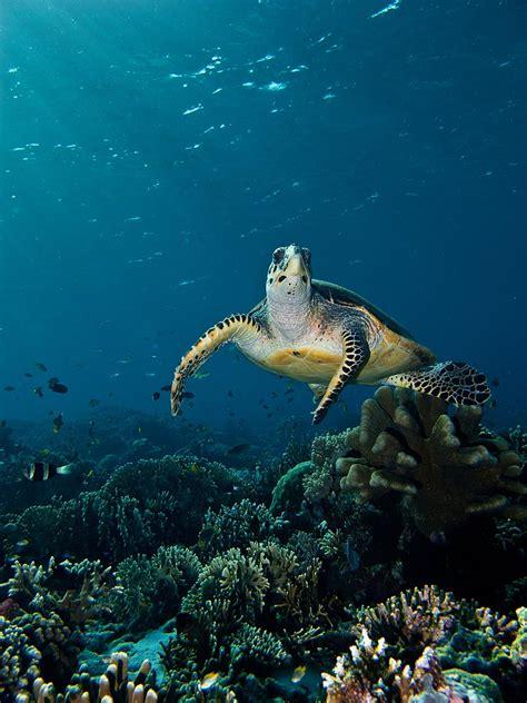 komodo dive safari beautiful underwater