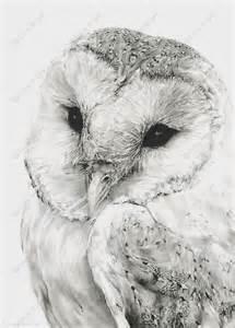 owl drawings barn owl sketches pencil drawings wildlife