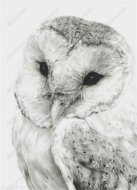drawing and painting animals pencil drawings of owls in black and white 1000 ideas about pencil drawings on