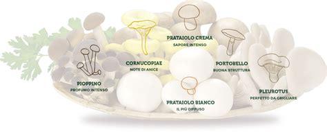 alimentazione equilibrata le ricette con i funghi coltivati per la tua cucina