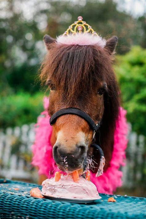 1000 images about horse party on pinterest horse 1000 ideas about funny birthday wishes on pinterest