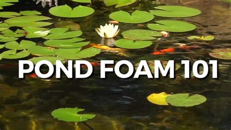 Ponds Foam by Pond Foam All You Need To About Best Prices On