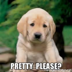Puppy Eyes Meme - pretty please meme pictures to pin on pinterest pinsdaddy