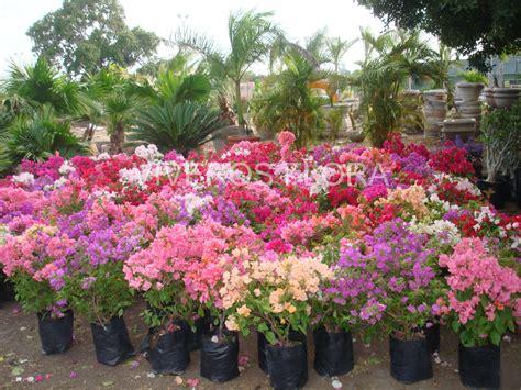 Imagenes De Jardines Con Veraneras   plantas viveros flora