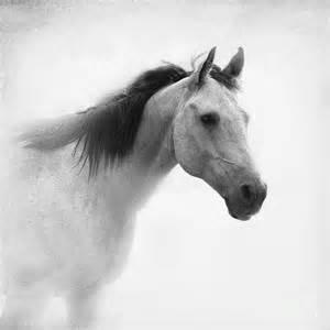 Black Duvet Cover I Dream Of Horses Photograph By Betty Larue