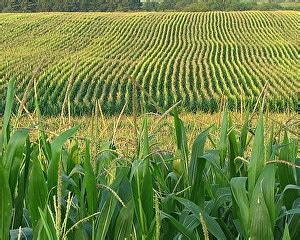 Resume Agronomy by Agronomy Careers Agronomist Crop Productions