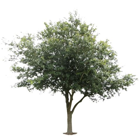 pattern photoshop trees immediate entourage free cutouts textures tutortials
