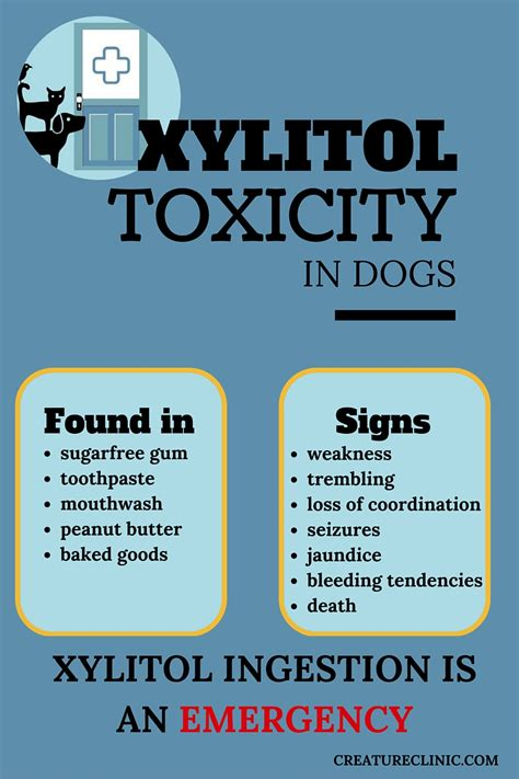xylitol and dogs could peanut butter kill your