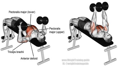 dumbbell bench decline hammer grip dumbbell bench press instructions and video